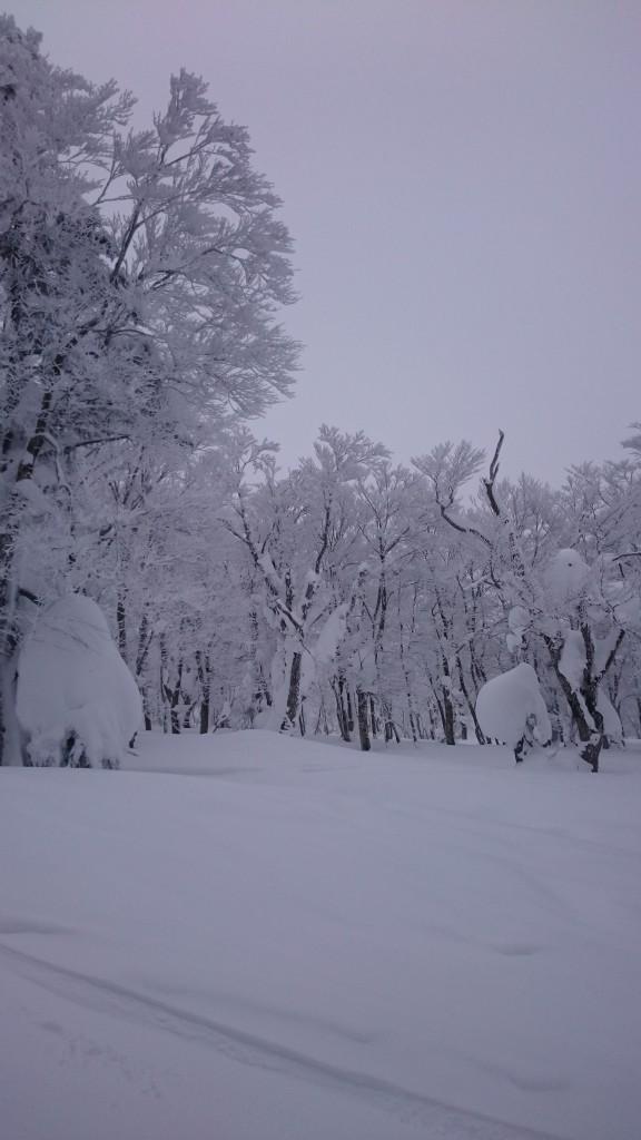 Hakkoda_Trees