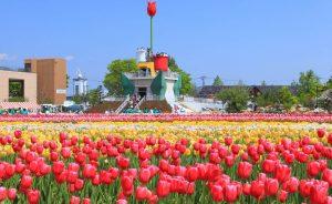 Spring at Tonami Tulip Fair Festival