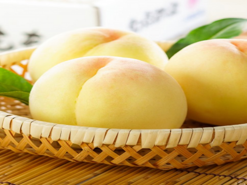 White peaches- Okayama seasonal fruit picking