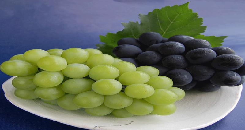 Muscat and Pione Grapes- Okayama seasonal fruit picking